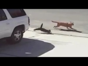 cat saves boys life